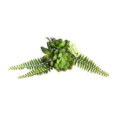 Sukkulente mit Band, D:9cm, grün - DEPOT Shops, Band, Deco, Plants, Wedding, Succulents, Balcony, Valentines Day Weddings, Deko