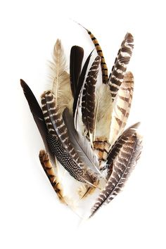found feathers (mary jo hoffan)
