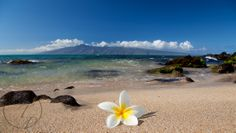 Perfect plumeria in front of Molokai