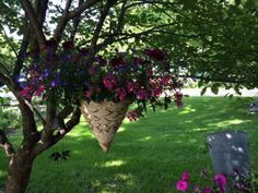 The farmhouse garden features a shady Canadian lilac tree by the front door patio area -  a perfect spot for the shade loving cone basket that I purchased at the Amish greenhouse just down the road ---