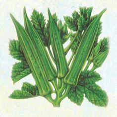 Green - Okra