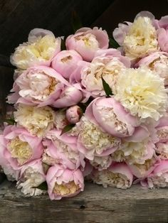 Peonies my favorite flower. They were in my wedding bouquet, beautiful blush pink peonies. My Flower, Fresh Flowers, Pretty In Pink, Beautiful Flowers, Peony Rose, Dahlia, Deco Floral, Floral Design, Colorful Roses