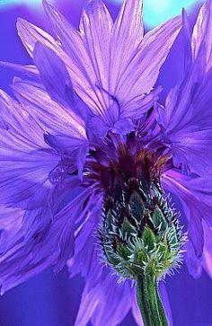 Фотографии Рукотворные цветы.Цветы своими руками.Рукоделие.   434 альбома   ВКонтакте