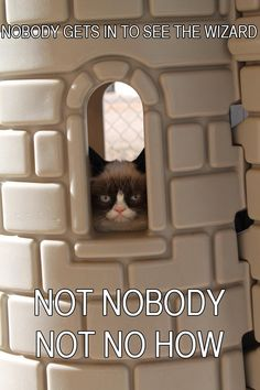 But Grumpy Cat............