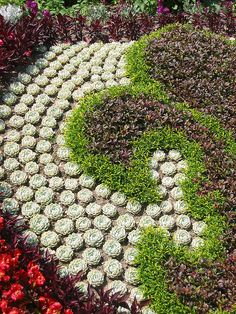 images about SucculentCacti gardens on Pinterest