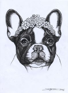 frenchie , french bulldog , cutie , cute , beauty, jeroen teunen , teunen , the dog painter