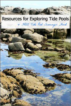 Tidepools: Resources and a FREE tide pool scavenger hunt printable- Peninsula Kids Beach Activities, Summer Activities For Kids, Preschool Science, Science Activities, Science Ideas, Ocean Unit, Monterey Bay Aquarium, Tide Pools, Ocean Themes
