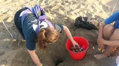 Our under 18 volunteers helping with a turtle nest relocation. Turtle Conservation, Volunteers, United Kingdom, Nest, Greece, Life, Nest Box, Greece Country, England