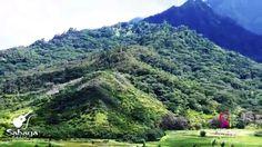 Hanalei Taro Fields ~ Kauai ~ View of the Day Kauai Hawaii, Fields, Facebook, Day, Water, Outdoor, Water Water, Outdoors, Outdoor Games