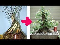 Bonsai Việt - Ghép nhiều cây nhỏ thành cây lớn - YouTube