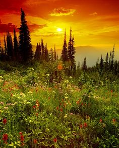 Mount Revelstoke National Park - British Columbia, Canada