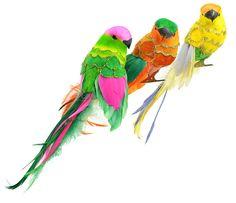 Fancy Tail Parrot 9