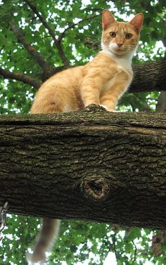 Pretty Little Ginger Kitty Sitting on a Neat Tree Platform.