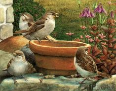 Sparrows feeding miniature watercolour painting by Tracy Hall