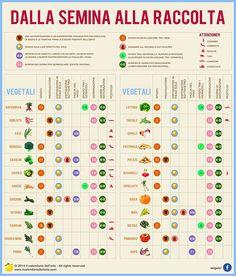 Le erbe aromatiche nell 39 orto schede tecniche pinterest - Calendario semina fiori ...