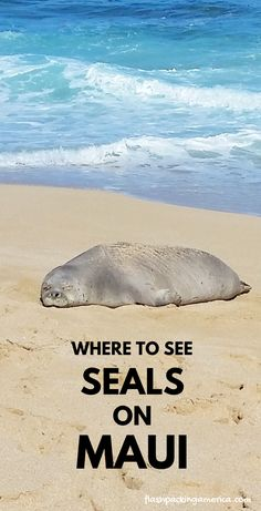 best beaches in maui. Where to see seals in Maui Hawaii. Where to see turtles in Maui Hawaii. Best time to see Hawaiian monk se Hawaii Vacation Tips, Maui Honeymoon, Trip To Maui, Beach Trip, Vacation Ideas, Honeymoon Ideas, Vacation Spots, Maui Travel, Travel Destinations Beach