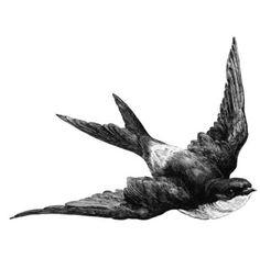bird, black, cute, drawing, illustration, white