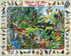 Birds of the Back Yard Puzzle-White Mountain Puzzles-White Mountain Puzzles