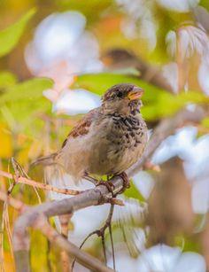 Sparrow by Vladimir Sherbakov on 500px