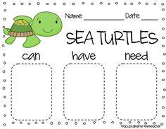 ogranizational chart for sea turtle lesson