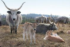 Öt kirándulás, amit a gyerkőcök is imádni fognak City People, Goats, Italy, Animals, Farming, Cities, Bb, Landscapes, Traveling