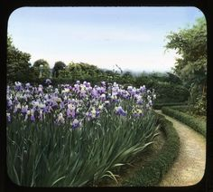 """A photograph is seldom, like a flower, complete and finished in itself,"" wrote J. Horace McFarland. This was particularly true for hand-colored glass lantern slides, such as this one ca. 1930. The person who colored them, called a ""colorist,"" might often change the color of flowers, making it difficult to know what was true to the garden.  Learn more on our blog by clicking the image.  Smithsonian Institution, Archives of American Gardens, J. Horace McFarland Collection. #TrueStory?"