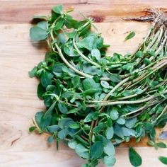 Shop for Purslane Seeds by the Packet or Pound.Com offers Hundreds of Seed Varieties, Including the Finest and Freshest Culinary Herb Seeds Anywhere. Purslane Plant, Grow Organic, Organic Herbs, Veg Garden, Edible Garden, Flower Seeds Online, Edible Wild Plants, Herb Seeds