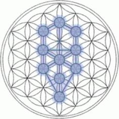 The Tree of Life fits inside the Flower of Life easily, showing why this symbol of the ancients was an important source of knowledge.