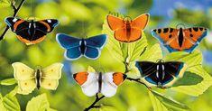 Moth, Insects, Animals, Handmade, Animales, Animaux, Animal, Animais, Bugs