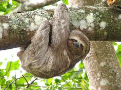 #Save The Sloth