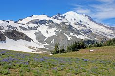 Picture of Mt. Rainier from the Summerland trail