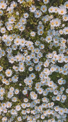 Daisy Wallpaper, Simple Iphone Wallpaper, Flower Iphone Wallpaper, Flower Background Wallpaper, Iphone Wallpaper Tumblr Aesthetic, Scenery Wallpaper, Cute Wallpaper Backgrounds, Pretty Wallpapers, Aesthetic Backgrounds