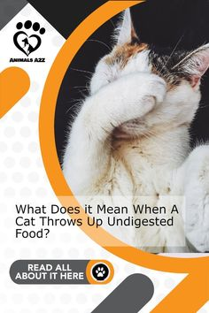 It's not very nice - heres why it happens and what you do to prevent it! Get more information at AnimalsA2Z.com. Cat Health, Health Tips, Cat Throwing Up, Best Cat Food, How Do I Get, Cute Cats And Kittens, Types Of Food, Medical Conditions, Advice