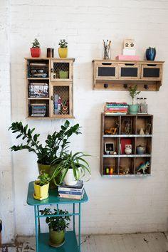 shelfs and plants