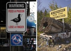Warning Feed a Pigeon, Lose a Finger - Be Prepared For The Unexpected Sign