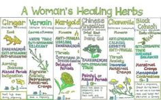 A Woman's Healing Herbs | Health & Natural Living  ~ Promoting healthy monogamous relationships, and sharing the opportunity with others @ www.aprimetimediva.com ~