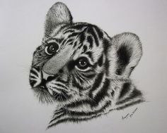 Baby tiger cub drawing