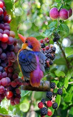 Birds ©: A Kingfisher in an Orchard. All Birds, Cute Birds, Pretty Birds, Little Birds, Beautiful Birds, Animals Beautiful, Cute Animals, Exotic Birds, Colorful Birds