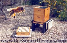 Ultimate Hive Stand & Ultimate Hive Cover, two of Bee Smart Design products! Perfect for your apiary needs! #hive #hives #hivestand #ultimatehivestand #hivecover #ultimatehivecover #bee #bees #beekeeper #beekeep #beekeeping #beesmart #besmart #apiary #english #garden #englishgarden #pollinate #pollinators #pollination #honey #nector #design