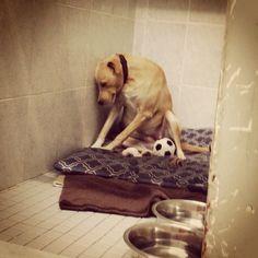 Lana, le chien le plus triste du monde, a trouvé une nouvelle famille !