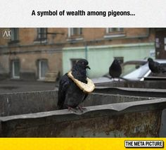 It's Like The Pigeon Version Of Drake