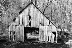 Um velho celeiro abandonado.  Fotografia: Mindy Milburn.