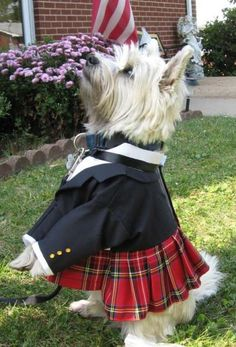 This Scottish Kilt for Dogs is the perfect accessory for the dog about town. It can be worn to weddings, for formal portraits, to costume parties, on Halloween, or any other time your dog wants to look his best. $65 http://www.zibbet.com/NeedfulThingsofSalem/artwork?artworkId=902476=status=active