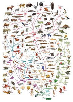 Tree of Life, em Do Nano ao Macro