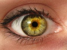 """funwithmedicine: """" Central heterochromia is where the central (pupillary) zone of the iris is a darker color than the mid-peripheral (ciliary) zone. Beautiful Eyes Color, Pretty Eyes, Cool Eyes, Heterochromia Eyes, Hazel Green Eyes, Rare Eyes, Iris Eye, Yennefer Of Vengerberg, Fotografia Macro"""
