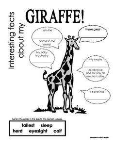 Safari Wild Adventure Printable 8x10 Zebra Facts Poster