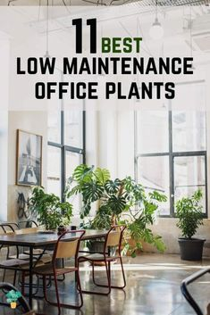 What are the best office plants that are easy to care for? - Green Thumb Revival Small Potted Plants, Bamboo Plants, Cool Plants, Indoor Plants, Organic Gardening, Gardening Hacks, Gardening Tools, Indoor Gardening, Vegetable Gardening