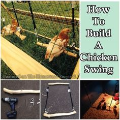 This step by step tutorial of how to build a chicken swing for the coop or moveable tractor gives each chicken a place to comfortably perch off the ground.  Using a natural log or branch to create your chicken swing is a bonus because the chickens will be able to have a firmer grasp onto …