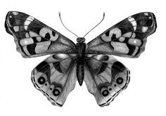 disegni farfalle a matita - Cerca con Google