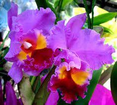 Resultado de imagem para Pinterest orquideas mais lindas do mundo